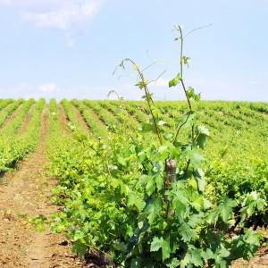 Portugal, Alentejo wine tasting tour