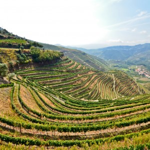 Douro Valley wine private tour