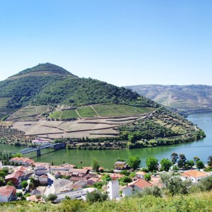 Douro vineyard wine tour in Portugal