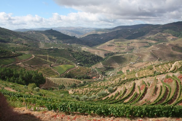 Douro valley day tour
